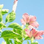 夏に咲く花
